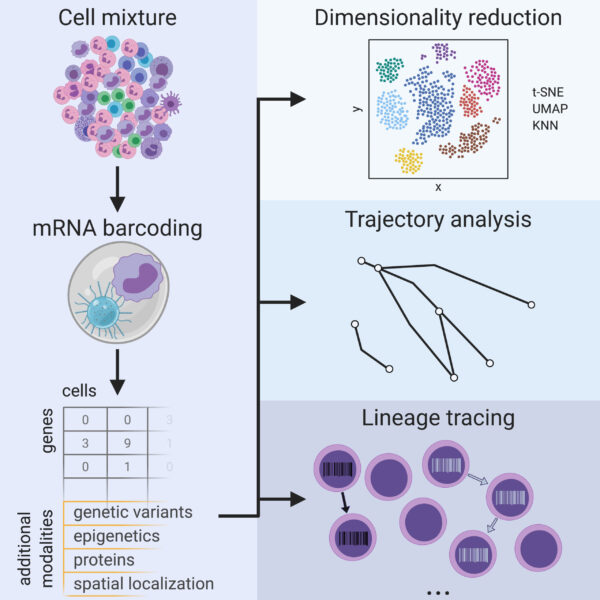 Review: Single-Cell RNA Sequencing To Disentangle The Blood System