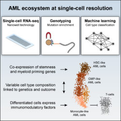 Single-cell_AML